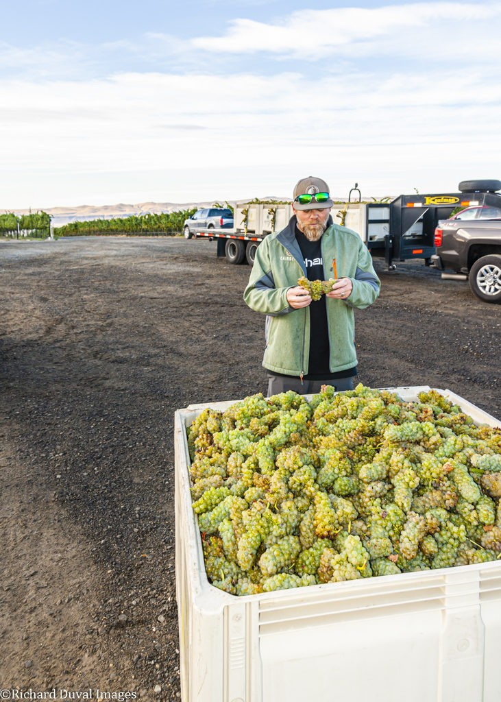 charlie lybeck cairdeas winery viognier lawrence vineyard 09 24 19 6355 731x1024 - VineLines Dispatch coverage of 2019 vintage continues