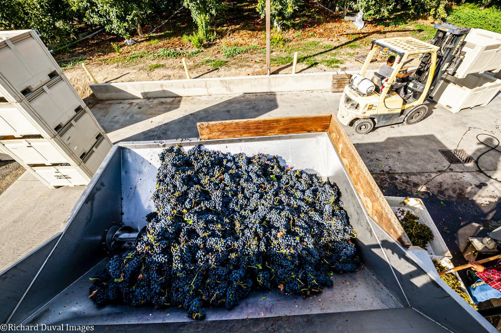copeland vineyard tempranillo two mountain winery 09 24 19 7060 1024x681 - VineLines Dispatch coverage of 2019 vintage continues