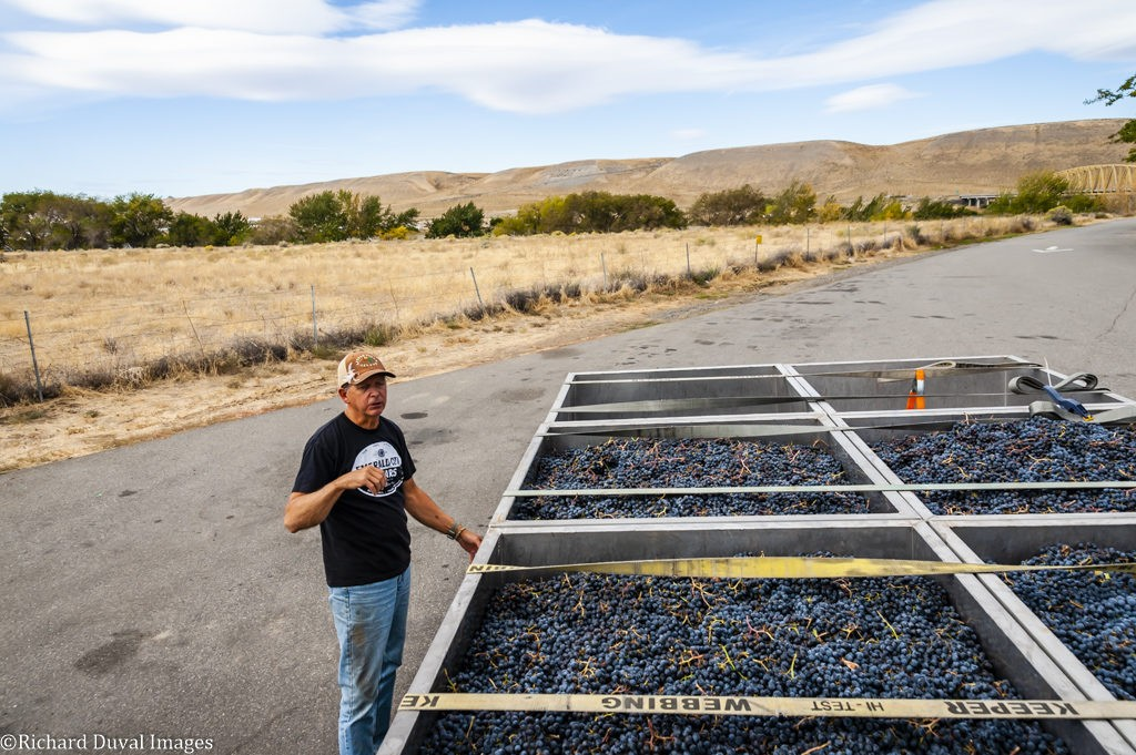 rob newsom boudreaux cellars 09 24 19 6935 1024x681 - VineLines Dispatch coverage of 2019 vintage continues