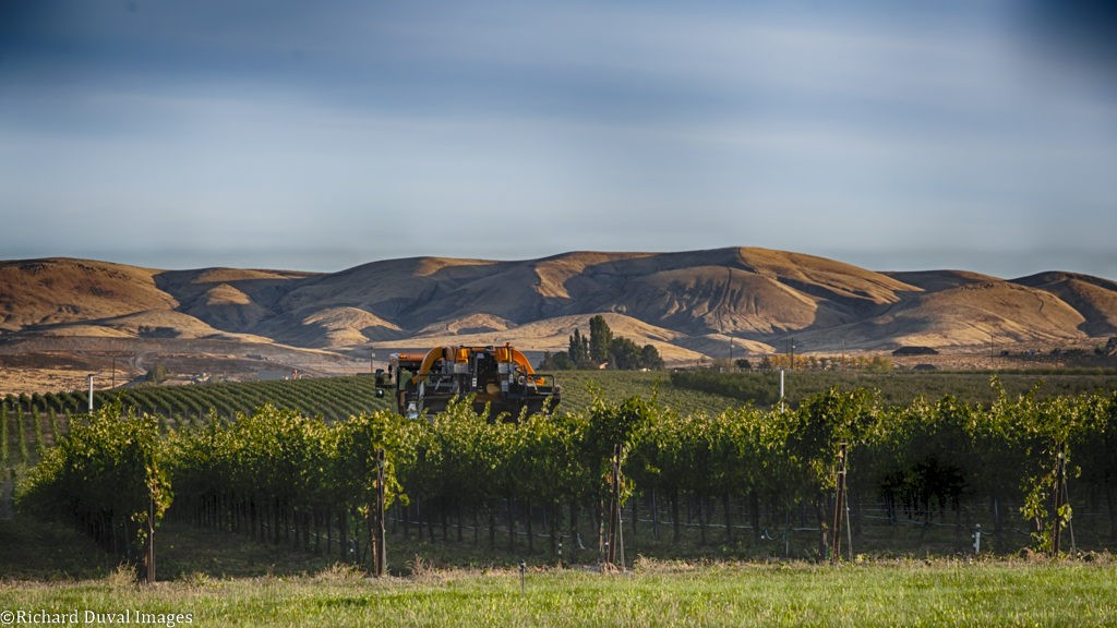 sheridan vineyard 09 25 19 7740 HDR 1024x576 - VineLines Dispatch coverage of 2019 vintage continues