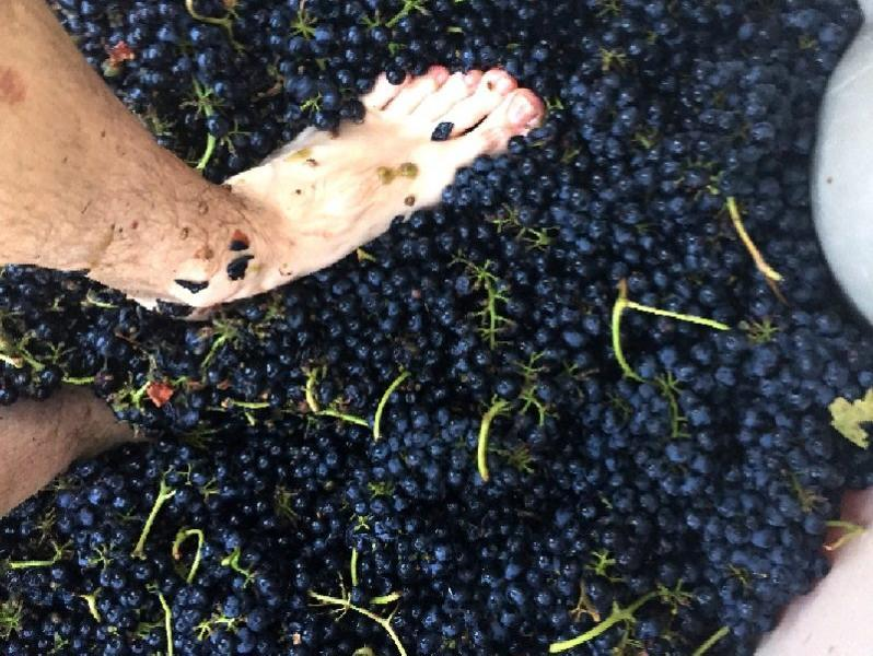 3099 photo 239463 - Fullerton Wine Course: Syrah