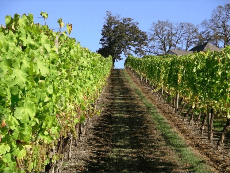 DeuxVertUp SdZA57.tmp  - Virtual Tasting: Deux Vert Vineyard Pinot Noir