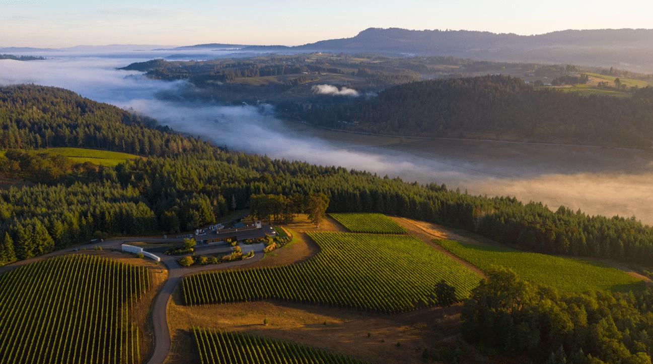 Penner Ash 1npDzF.tmp  - Virtual Tasting with Oregon's Trailblazing Winemakers
