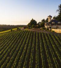 willamette valley vineyards estate vineyard andrea Johnson photography 199x223 - Oregon wineries woo sports broadcaster Tony Kornheiser
