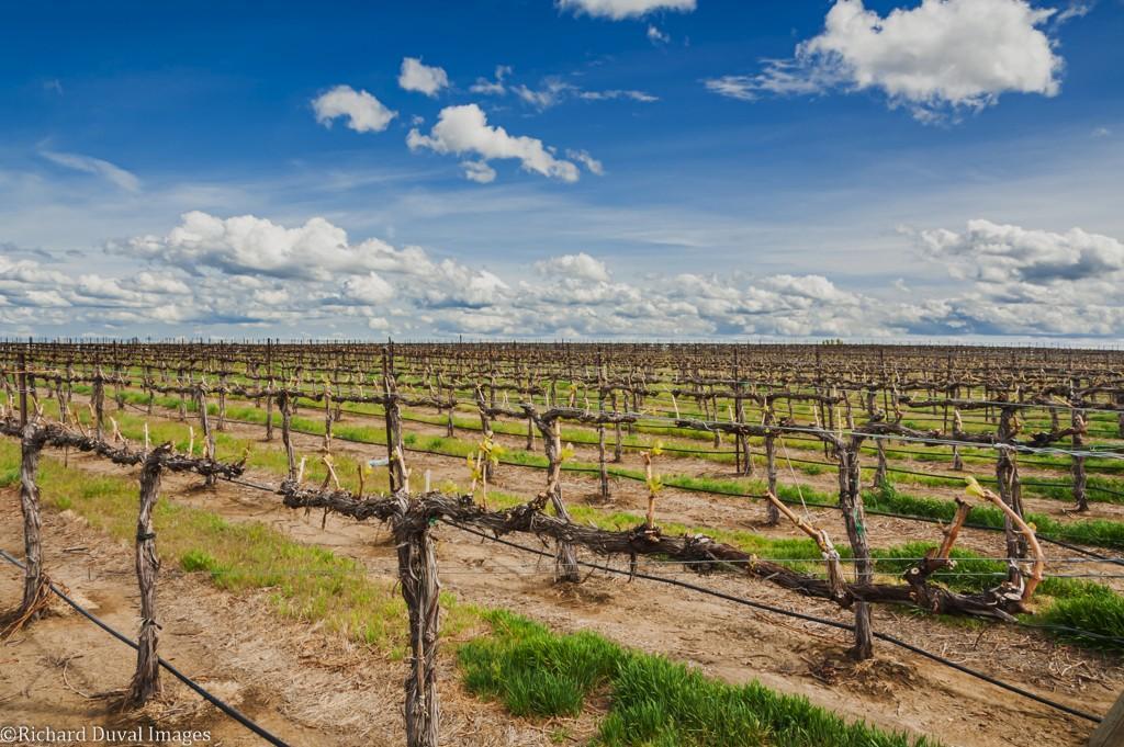 milbrandt vineyards 04 25 2020 richard duval images - Southern Oregon starts June ahead of historically hot 2015 vintage