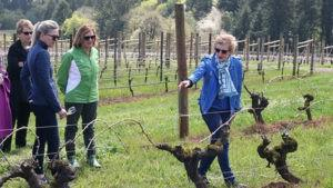 vineyard hike wine tasting 3PiZLy.tmp  300x169 - Pioneering Footsteps Hike, Wine Flight & Lunch