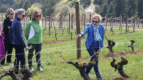 vineyard hike wine tasting 3PiZLy.tmp  - Pioneering Footsteps Hike, Wine Flight & Lunch