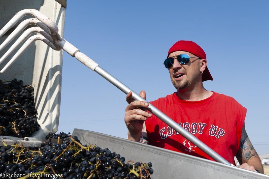 brad binko eternal wines pinot noir bin rake - VineLines Dispatch: Harvest of Walla Walla Valley