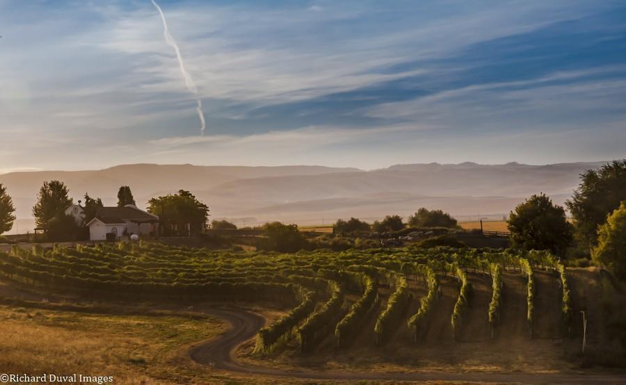 castillo de feliciana vineyard 09 07 2020 - VineLines Dispatch: Harvest of Walla Walla Valley