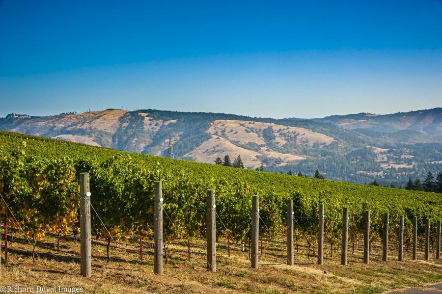 celilo vineyard 10 05 20 4481 richard duval images - VineLines Dispatch: A Gorgeous look at harvest