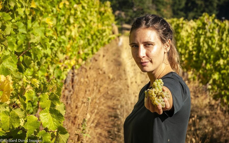 corry arnold underwood mountain vineyards 10 05 20 4230 richard duval images - VineLines Dispatch: A Gorgeous look at harvest