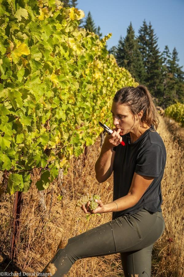 corry arnold underwood mountain vineyards riesling sample 10 05 20 4252 richard duval images - VineLines Dispatch: A Gorgeous look at harvest