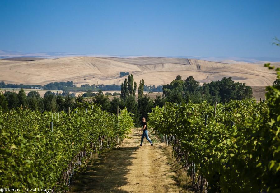 kelsey albro itameri breezy slope vineyard 09 06 2020 - VineLines Dispatch: Harvest of Walla Walla Valley
