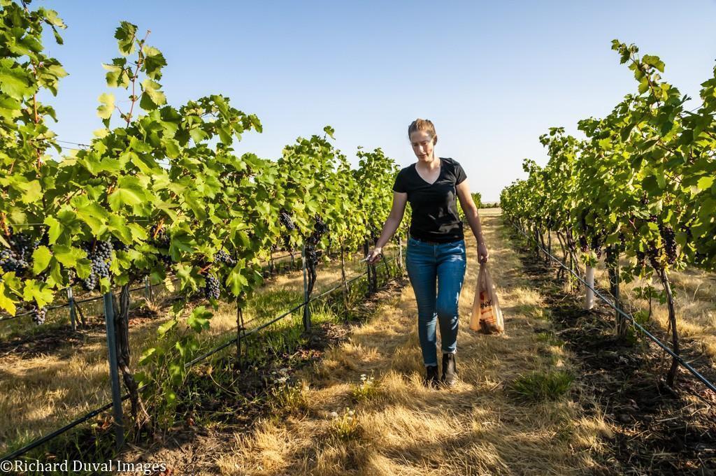 kelsey albro itameri primitivo les collines 09 06 2020 - VineLines Dispatch: Harvest of Walla Walla Valley