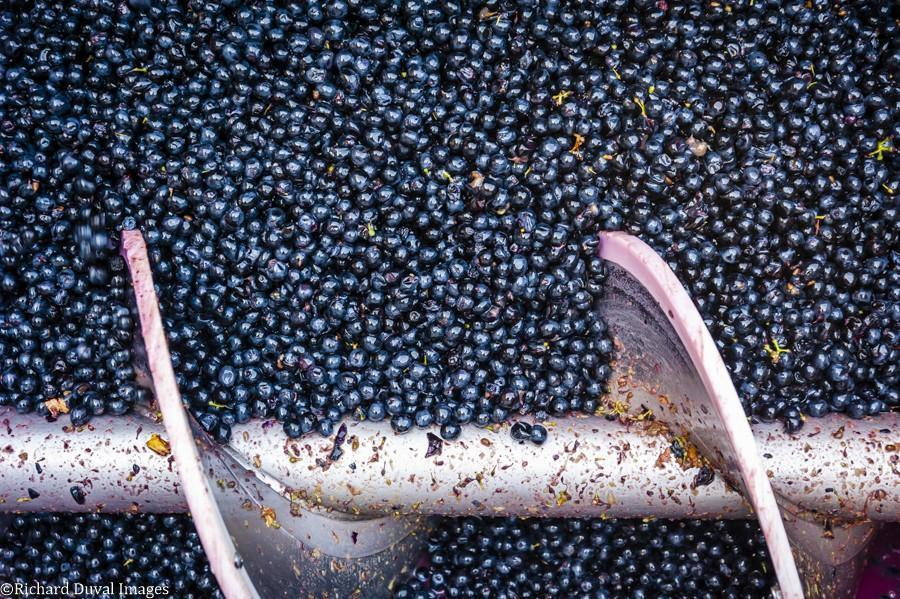 maryhill winery berries 10 09 20 7318 richard duval images - VineLines Dispatch: A Gorgeous look at harvest