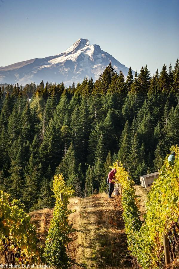 mt hood looms over phelps creek richard duval images - VineLines Dispatch: A Gorgeous look at harvest