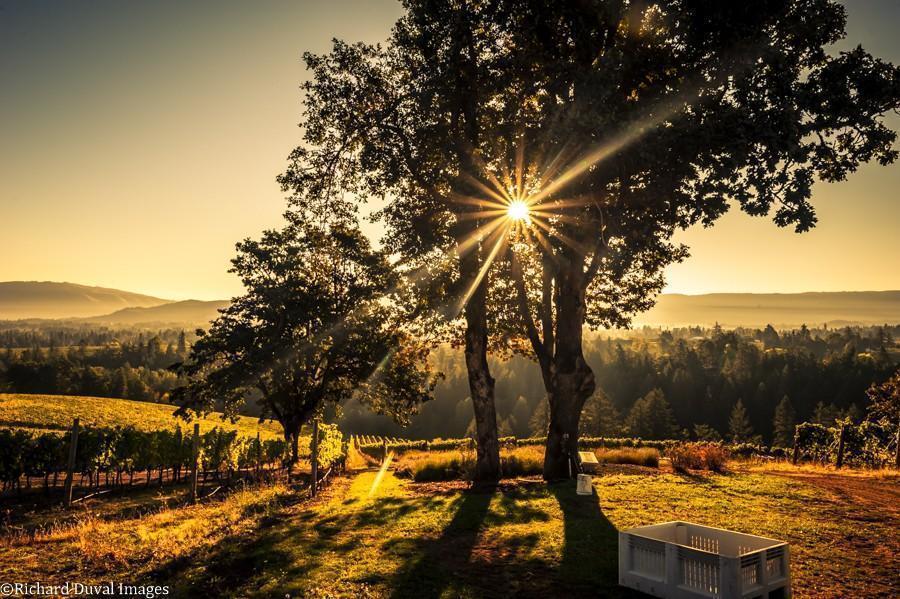 phelps creek vineyard bin 10 06 20 5218 richard duval images - VineLines Dispatch: A Gorgeous look at harvest