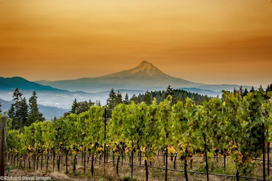 rainmaker vineyard 10 07 20 6039 HDR richard duval images - VineLines Dispatch: A Gorgeous look at harvest