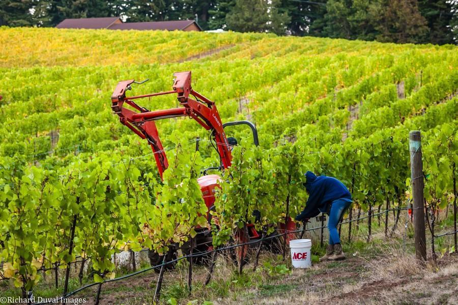 rainmaker vineyard tractor 10 07 20 6067 richard duval images - VineLines Dispatch: A Gorgeous look at harvest