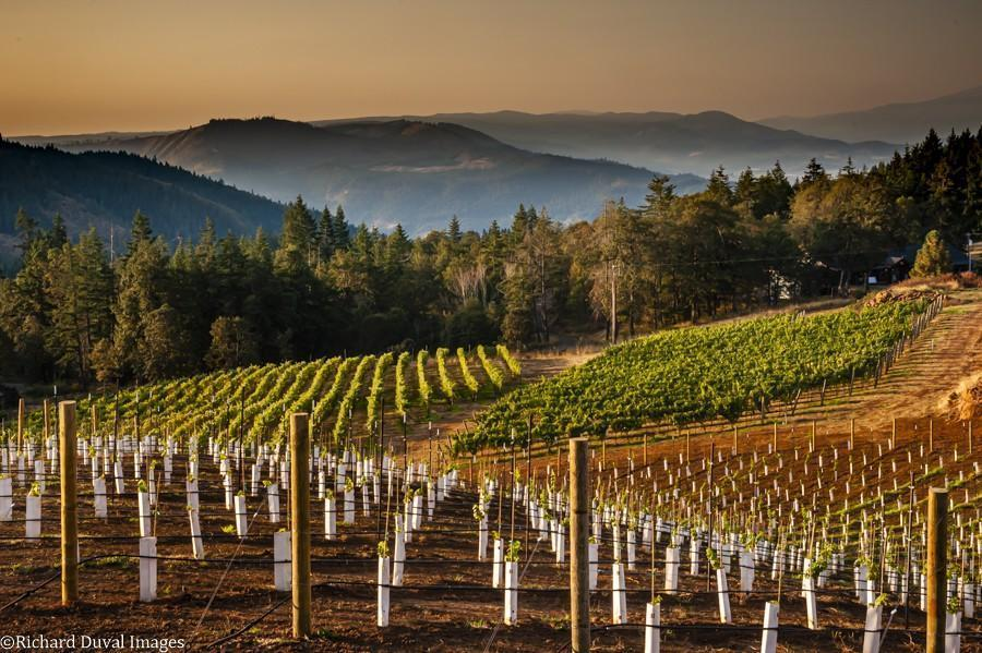rainmaker vineyard young plantings 10 07 20 6321 richard duval images - VineLines Dispatch: A Gorgeous look at harvest