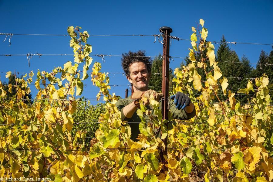 scott gulstine loop de loop winery 10 05 20 4427 richard duval images - VineLines Dispatch: A Gorgeous look at harvest