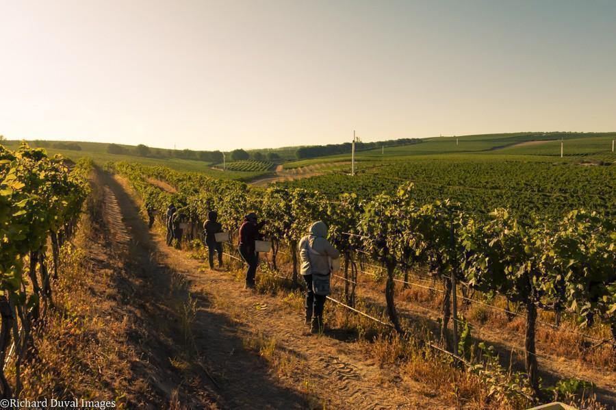 syrah seven hills vineyard team harvest 09 08 2020 - VineLines Dispatch: Harvest of Walla Walla Valley