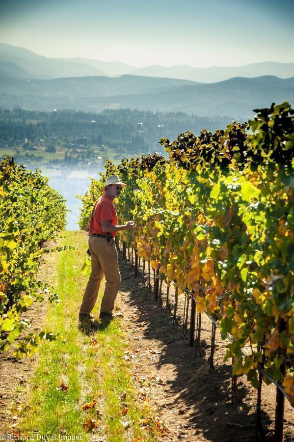 tony dollar lobo hills chardonnay row celilo vineyard 10 05 20 4670 richard duval images - VineLines Dispatch: A Gorgeous look at harvest