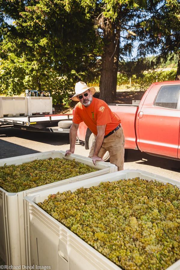 tony dollar lobo hills winery celilo vineyard chardonnay 10 05 20 4528 richard duval images - VineLines Dispatch: A Gorgeous look at harvest