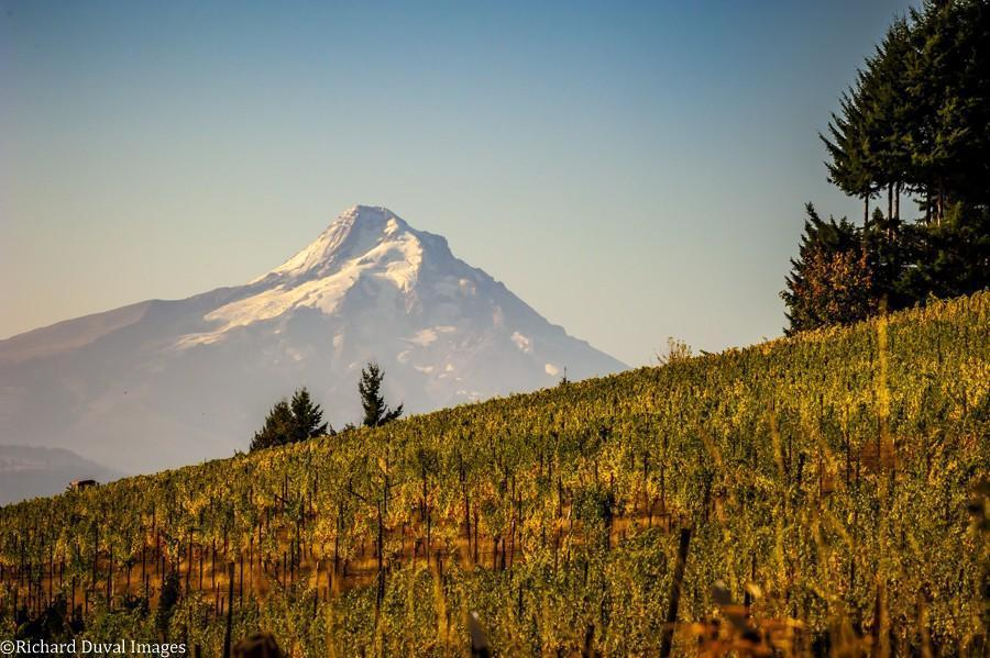 underwood mountain vineyard 10 05 20 4093 richard duval images - VineLines Dispatch: A Gorgeous look at harvest
