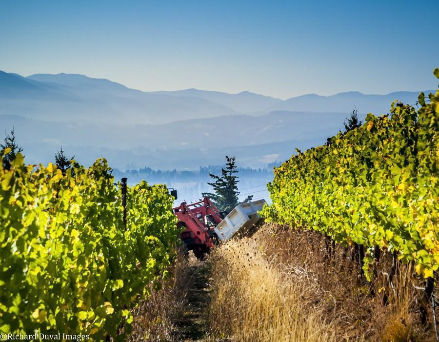 underwood mountain vineyards tractor 10 05 20 4381 richard duval images - VineLines Dispatch: A Gorgeous look at harvest