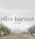 Domaine Roy Olive Harvest m8JpSh.tmp  120x134 - Olive Harvest