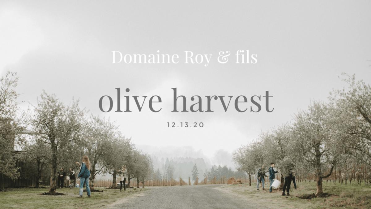 Domaine Roy Olive Harvest m8JpSh.tmp  e1607747156854 - Olive Harvest