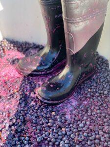 Wine 102 AbS4ns.tmp  225x300 - Wine 102 – Troon Vineyard Estate Location